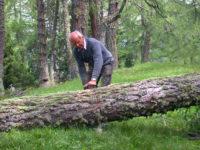 Baum ablängen