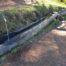 Brunnen beim 9spitzige Lärch