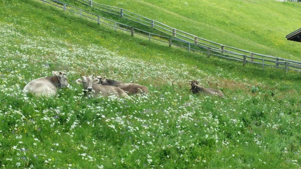 hat fast zuviel frisches Gras